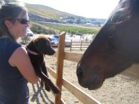 Lupe meeting a horse