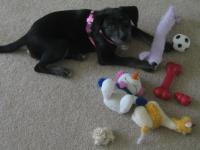 She pulled all her toys out and put them in a pile.  Sadly, only about half of them still exist