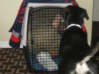 Penny didn't want to go in her crate so I thought I would show her how its done